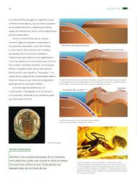 Libro de ciencias naturales 6 grado 2019 2020 es uno de los libros de ccc revisados aquí. Ciencias Naturales Sexto Grado 2016 2017 Online Pagina 56 De 176 Libros De Texto Online