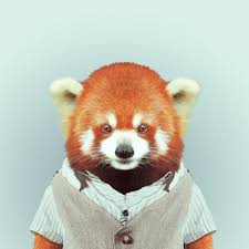 zoo animals in clothes. Wonderful Animals Zoo Animals Dressed In People Clothes Inside Animals In Clothes S