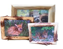 rustic log picture frames with wildlife photos