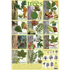 Tree Identification Chart Familiar Tree Identifier Poster