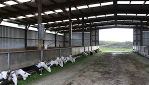 goat house plans awesome goatvet likes this website about shed for dairy goat housing in new