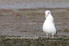 gulls and starfish an almost disturbing essay in photos galen notice