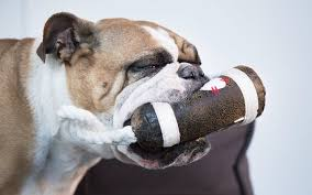 tug toys are among the best toys for bulldogs because they utilize their strengths but do not require too much physical exertion