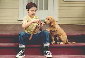 a dog s purpose bailey. Modren Bailey U0027A Dogu0027s Purposeu0027 Ponders The Meaning Of Life  The Blade Intended A Dog S Purpose Bailey S