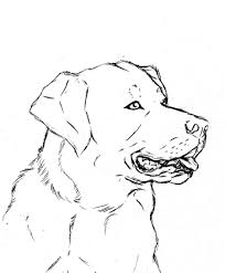 Small Picture Lab Dogs Coloring Pages Labrador Retriever Retriever In