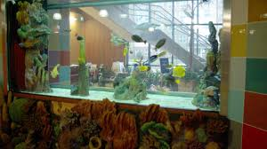 best cool custom fish tanks chicago 0 11526