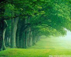 Green nature wallpaper, Nature desktop ...