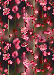 flower wallpaper wallpaper sun