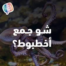 خرابيش Kharabeesh - الشاطرين باللغة العربية واللي طول الوقت برصدوا الأخطاء  الاملائية رح يعرفوا الجواب أكيد 😜
