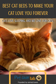best cat beds for comfy cats
