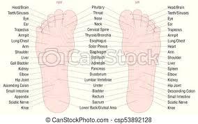 Foot Reflexology Zone Massage Areas Names