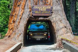 drive through redwoods tunnel logs and scenic drives chandelier tree