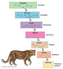 Exhaustive Phylum Classification Chart Taxonomy Chart Living