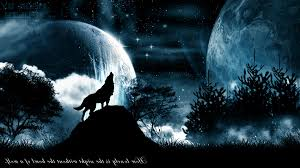 howling wolf wallpaper.  Wolf Howling Wolf Pictures Background Id100339305 On Wallpaper