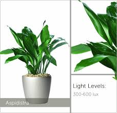 best low light office plants. Innovation Ideas Low Light Office Plants Excellent Best For Pictures