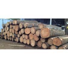 <b>Silver Oak Wood</b> Logs at Rs 470 /cubic feet | Oak Log | ID ...