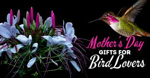 fun mother s day gifts and gift ideas for bird and backyard bird watchers