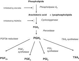 Paracetamol Manufacturing Process Flow Chart Paracetamol Acetaminophen Mechanisms Of Action Anderson