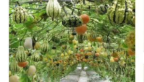 vertical garden ideas for space saving