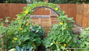Small Picture Vegetable Garden Planting Ideas Garden ideas and garden design