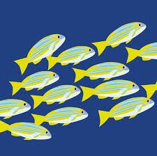 sea creatures of fish