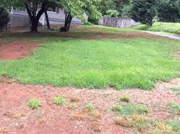 trugreen lawn service review 209232