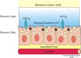 mucus ion regulation