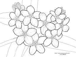 ワスレナグサの花の塗り絵の下絵画像