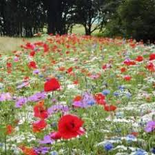 Small Picture Best 20 Wild flower gardens ideas on Pinterest Wild flower