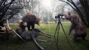 background images animals. Beautiful Background Animal Full HD Background And Images Animals R