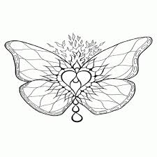 Kleurplaten Vlinders Voor Volwassenen