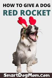 how to give a dog a red rocket smart