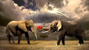 Elephant wallpaper ...