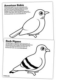 Small Picture Rock Pigeon and American Robin Coloring Pages in Coloring Pages