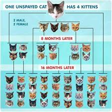 How Fast A Cat Can Reproduce Please Look At This Chart