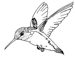 Small Picture Ruby Throated Hummingbird Bird Coloring Page Color Luna