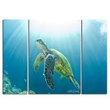 christopher doherty x27 sea turtle x27 canvas wall art 3 on sea turtle canvas wall art with shop christopher doherty sea turtle canvas wall art 3 piece