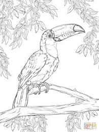 toco toucan coloring page supercoloring