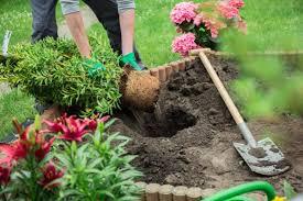 beginner gardening. Gardening Tips For Beginners Beginner G