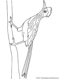 Small Picture Roadrunner coloring pages 14 Free Coloring Page Site