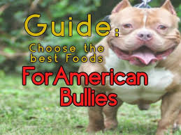 How To Choose The Right Food For Your American Bully