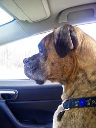 car travel safety for dogs do s and don ts front seat