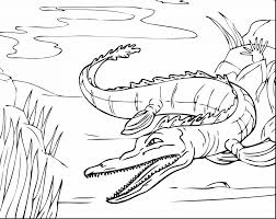 Small Picture Download Coloring Pages Alligator Coloring Pages Alligator