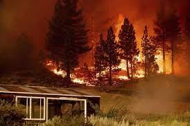 Tamarack Fire south of Lake Tahoe grows ...