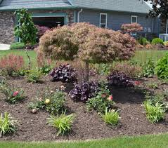 Goshiki Shidare, a weeping Japanese maple used as a specimen plant in a  landscape planting