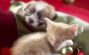 puppies and kittens sleeping. Exellent Puppies Sleeping Kitten Puppy To Puppies And Kittens G