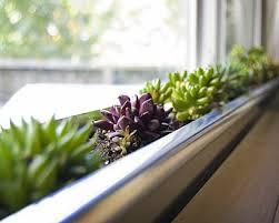 fabulous homedeco design diy indoor garden ideas in indoor garden ideas