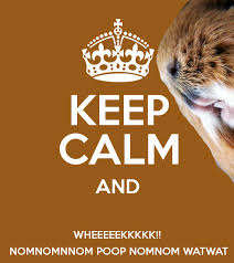 Image result for guinea pig meme clean