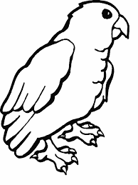 Parrot Coloring Page free printable parrot coloring pages for kids on parrot outline template