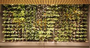 Small Picture Inner City Nature Green Walls and Vertical Gardens Inner City Nature